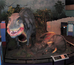 T-Rex Slaying Triceratops at St. Louis Science Center